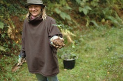 tree planting in woodland restoration project, north devon